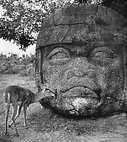 Ein Reh knabbert an einem Olmekenkopf in Villahermosa, Mexiko 1970er Jahre. A deer by a Olmec sculpture head at Villahermosa, Mexico 1970s.