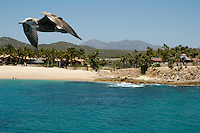 Mueller friends and family attend their annual board meeting in Cabo San Lucas. Days of fun in the sun are had by all. Laughing, swimming, playing...