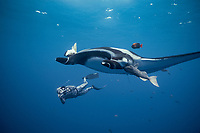 giant oceanic manta ray and freediving videographer, Isla San Benedicto, Mobula birostris, formerly Manta birostris, Mexico, East Pacific Ocean