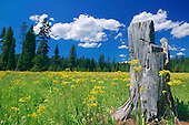Meadow at Lolo Pass