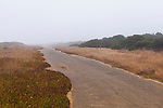 Coastal bike path along old road in sand dunes, MacKerricher State Park on the California Coast,  north of Fort Bragg, California at Williams Point.  This stunning coastline is often skipped by coastal drivers preferring the straight route along U.S. 101.