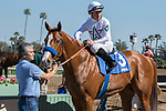 ARCADIA, CA  FEBRUARY 18:  #3 Justify, ridden by Drayden Van Dyke, in the winners circle after his debut win on February 18, 2018 at Santa Anita Park in Arcadia, CA. (Photo by Casey Phillips/ Eclipse Sportswire/ Getty Images)