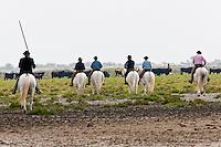 France/13/Bouches du Rhone/Camargue/Parc Naturel Régionnal de Camargue/Saintes Maries de la Mer: Tri des taureaux dans une manade lors d'une ferrade - au moment du pèlerinage des gitans