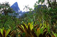 Vegetação típica no Pico da Neblina, acima de 2000 metros de altitude<br /> Parque Nacional do Pico da Neblina <br /> São Gabriel da Cachoeira , Amazonas, Brasil.<br /> Foto Marcello Lourenço.