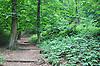 Waldweg zum Scharlachberg