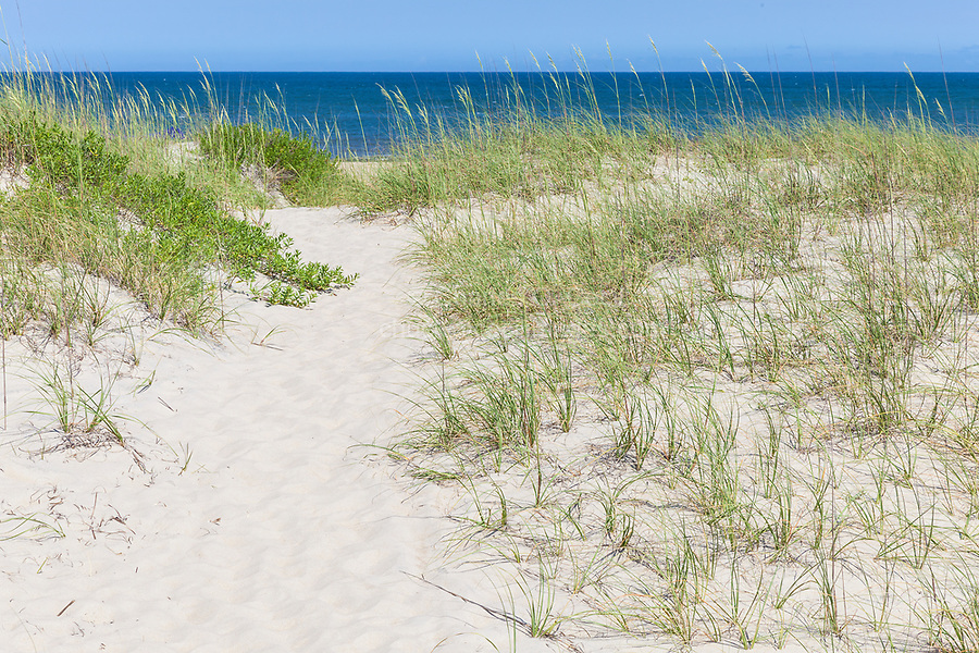 Avon, Outer Banks, North Carolina.  Pathway through Sea Oats to the Beach.