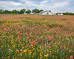 Seguin, Guadalupe County, TX: Field of wildflowers with Christ Lutheran Church of Elm Creek in the distance