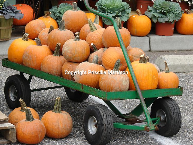 New Jersey - September 16, 2008:  A cart is laden with pumpkins.
