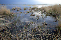 Zhalong Wetlands, Heilongjiang Province. China. 2011