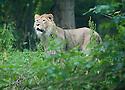 Edinburgh Lions