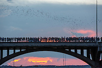 Congress Avenue Bridge shelters the largest urban bat colony in North America. Between 750,000 and 1.5 million bats fly out near dusk. Best viewing dates: April-Oct.