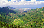 Native / endemic forest. Black River Gorges National Park, Mauritius.