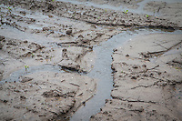 Soil erosion in sugar beet after heavy rainfall - May, Lincolnshire