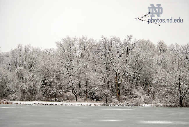 January 3, 2021; Geese fly over St. Mary's Lake after a morning snow shower. (Photo by Barbara Johnston/University of Notre Dame)