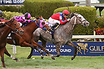 HALLANDALE BEACH, FL - FEBRUARY 06:     Power Alert #10 with Julien Leparoux on board, defeats Amelia's Wild Ride #13 with Jose Lezcano by a neck in the Gulfstream ParkTurf Sprint Stakes Black Type  on Donn Handicap Day at Gulfstream Park on February 06, 2016 in Hallandale Beach, Florida. (Photo by Liz Lamont)