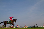 FUNABASHI,JAPAN-MARCH 20: Fan Dii Na,ridden by Yasunari Iwata,prepares for the Flower Cup at Nakayama Racecourse on March 20,2017 in Funabashi,Chiba,Japan (Photo by Kaz Ishida/Eclipse Sportswire/Getty Images)