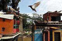 A bird flies near the Ciliwung River, in the centre of Jakarta.