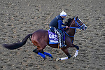 November 5, 2020: Mr. Money, trained by trainer W. Bret Calhoun, exercises in preparation for the Breeders' Cup Dirt Mile at Keeneland Racetrack in Lexington, Kentucky on November 5, 2020. John Voorhees/Eclipse Sportswire/Breeders Cup/CSM