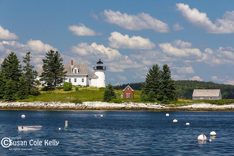 Lupines in Deer Isle, Maine, USA