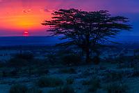 Tanzania. Serengeti Sunset.