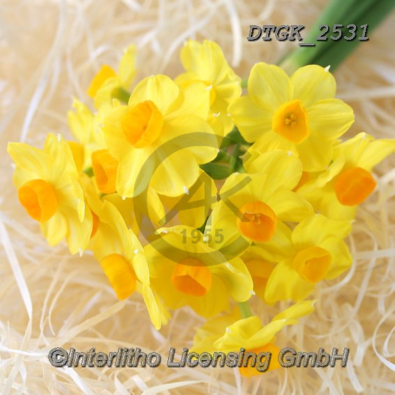 Gisela, FLOWERS, BLUMEN, FLORES, photos+++++,DTGK2531,#f#, EVERYDAY