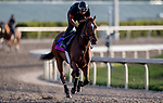 January 23, 2019: Something Awesome prepares for the Pegasus World Cup Invitational at sunrise on January 23, 2019 at Gulfstream Park in Hallandale Beach, Florida. Scott Serio/Eclipse Sportswire/CSM