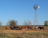 Horses at Windmill, Texas