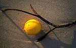 A lemon washed ashore on the Kailua Beach of Oahu, Hawaii.