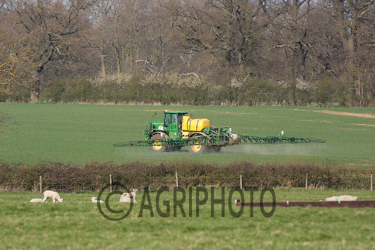 A self-propelled John Deere sprayer working in a field of Spring Barley behind a field of sheep<br /> Picture Tim Scrivener 07850 303986