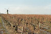 Vineyard with windmill at Petit Bonnezeaux. Coteaux du Layon, Anjou, Loire, France
