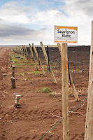 A vineyard sign saying Sauvignon Blanc Bodega Del Fin Del Mundo - The End of the World - Neuquen, Patagonia, Argentina, South America