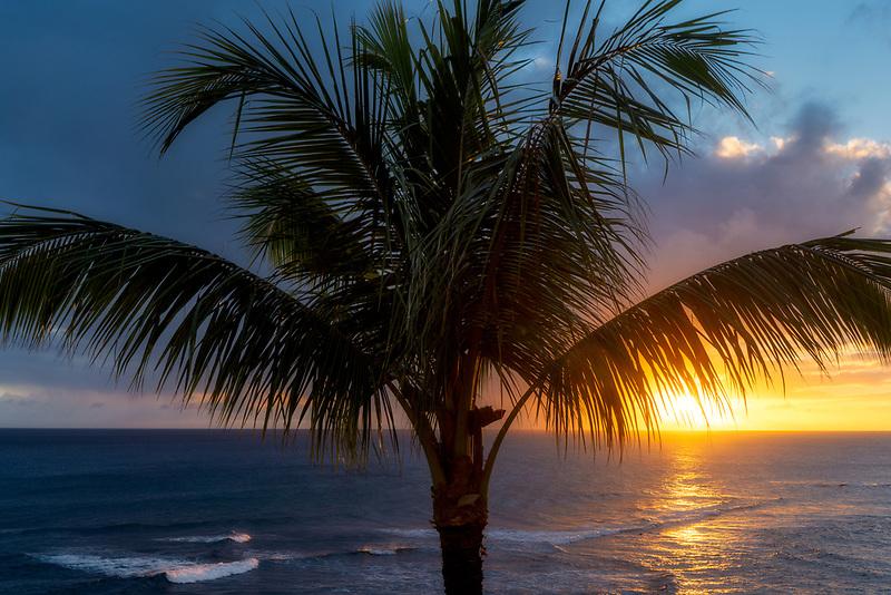 Palm tree and sunset. Piopu, Kauai, Hawaii