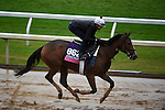 October 28, 2015:  Pricedtoperfection, trained by Chad C. Brown and owned by Klaravich Stables Inc  & William H. Lawrence, exercises in preparation for the Breeders' Cup Juvenile Fillies Turf at Keeneland Race Track in Lexington, Kentucky on October 28, 2015. John Voorhees/ESW/CSM