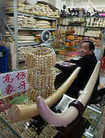 Fake elephant tusks made from cow bone is seen on sale in a shopping mall, Li Wan District, Guangzhou, Guangdong Province, China, 28 November 2013. <br /> <br /> Photo by Alex Hofford / Sinopix