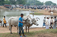 INDIA Jharkhand, cattle market in village / INDIEN Jharkhand, Viehmarkt in einem Dorf