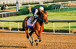 April 27, 2021: Clairiere, trained by trainer Steve Asmussen, exercises in preparation for the Kentucky Oaks at Churchill Downs on April 27, 2021 in Louisville, Kentucky. Scott Serio/Eclipse Sportswire/CSM