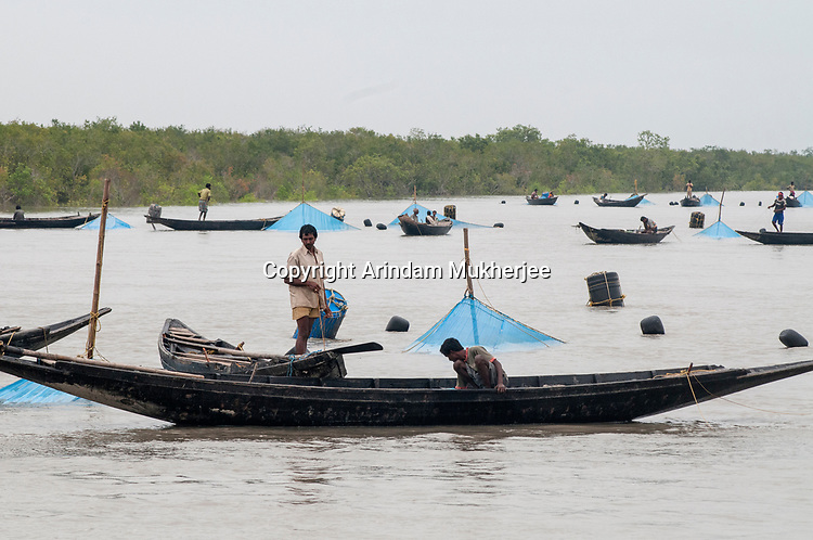 Fishermen at work on a river in Sunderbans, West Bengal, India. Arindam Mukherjee.