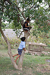 Boys playing in a tree in the Mayan community of San Miguel, Toledo, Belize