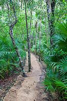 Tropical Vegetation alongside the Nature Trail, Xel Ha Eco-adventure Park, Playa del Carmen, Riviera Maya, Yucatan, Mexico.