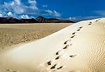 Spanien, Kanarische Inseln, Fuerteventura, Corralejo: Duenen, Fußspuren im Strand | Spain, Canary Island, Fuerteventura, Corralejo: dunes and footprints
