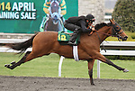 April 03, 2014: Hip 12 Henrythenavigator - Motivated Sreva consigned by Wavertree Stables worked 1/8 in 09:4.  Candice Chavez/ESW/CSM