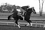 Speech, trained by trainer Michael W. McCarthy, exercises in preparation for the Breeders' Cup Filly & Mare Sprint at Keeneland Racetrack in Lexington, Kentucky on November 3, 2020.