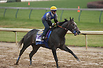 The Factor, trained by Bob Baffert and to be ridden by Martin Garcia , exercises in preparation for the 2011 Breeders' Cup at Churchill Downs on  November 4, 2011.