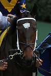 HOT SPRINGS, AR - MARCH 12: Nickname (4) before the running of the Honeybee Stakes at Oaklawn Park on March 12, 2016 in Hot Springs, Arkansas. (Photo by Justin Manning)