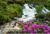 Tom Mackie, LANDSCAPES, LANDSCHAFTEN, PAISAJES, FOTO, photos,+County Donegal, EU, Eire, Europe, European, Ireland, Irish, Tom Mackie, cascade, cascading, floral descriptions, flowing, gre+en, horizontal, horizontals, landscape, landscapes, natural landscape, purple, rhododendron, spring, springtime, water, water+'s edge, waterfall, waterfalls,County Donegal, EU, Eire, Europe, European, Ireland, Irish, Tom Mackie, cascade, cascading, fl+oral descriptions, flowing, green, horizontal, horizontals, landscape, landscapes, natural landscape, purple, rhododendron, s+,GBTM190324-1,#L#, EVERYDAY ,Ireland