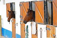 Horses in the stable. Herdade da Malhadinha Nova, Alentejo, Portugal