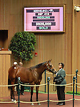 September 10, 2014: Hip #413 Bernardini - Yellow Heat colt consigned by Baccari Bloodstock sold for $925,000 at the Keeneland September Yearling Sale.   Candice Chavez/ESW/CSM