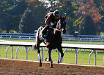 October 21, 2015:  Harmonize training this morning for trainer Bill Mott in preparation for the Breeder's Cup Juvenile Fillies Turf.  Candice Chavez/ESW/CSM