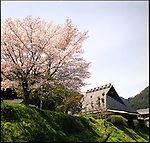 Cherry blossom and a Japanese traditional house in Ohara, Kyoto.<br />