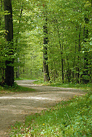 Gravel road winds through Itasca State Park in Minnesota,